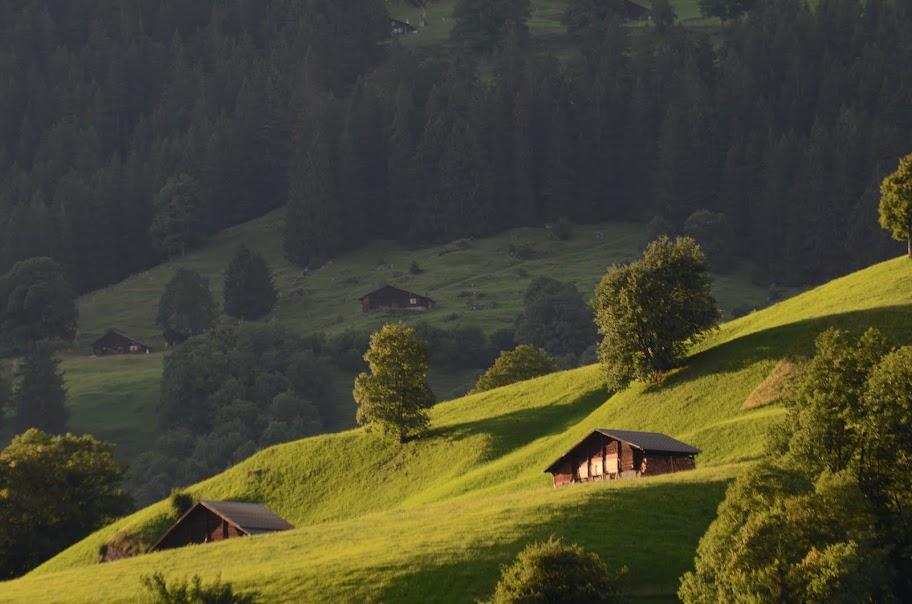 Alpių pievos