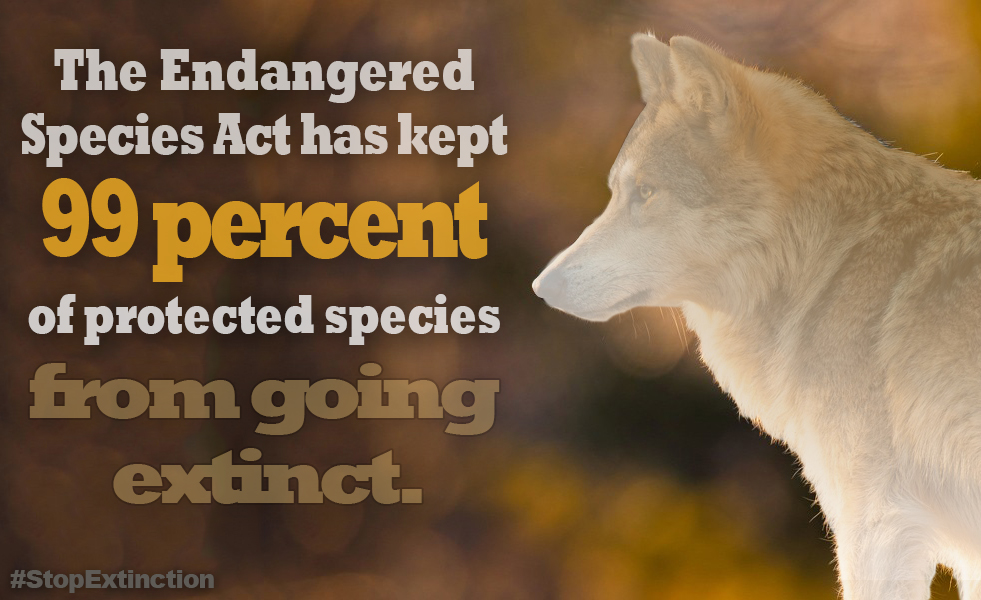 Grand Canyon Wolf Recovery Project - Action Alerts