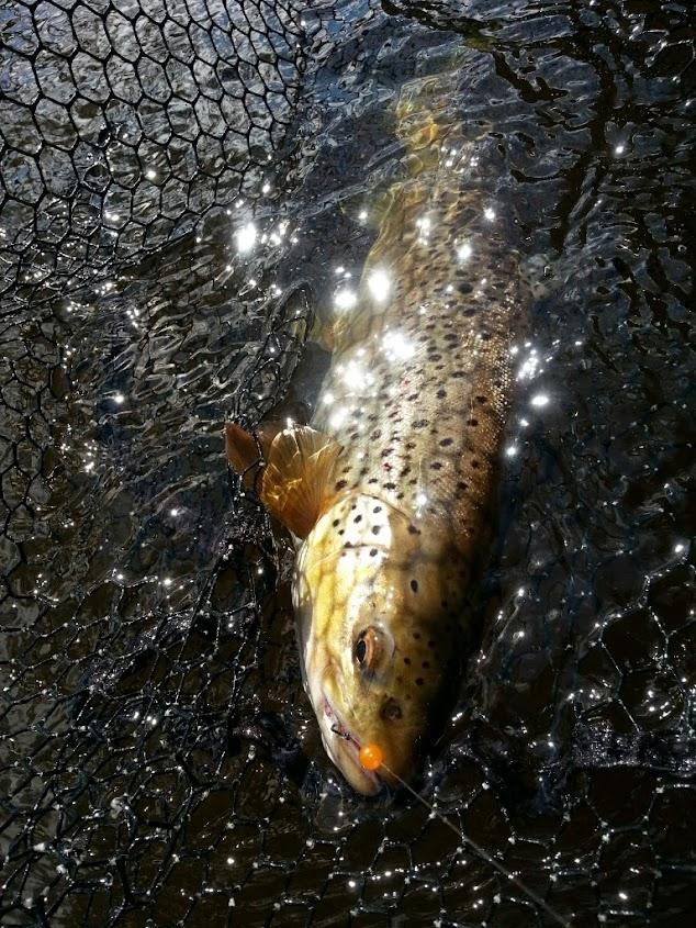 bead fishing
