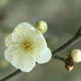 Mei Zhao
