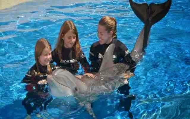 Nadar con delfines (Ideas para festejar un cumpleaños)
