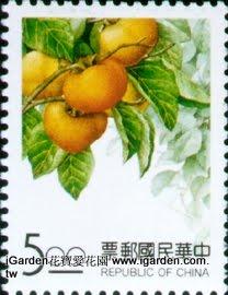 特325臺灣水果郵票-柿子 | iGarden花寶愛花園