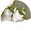 Ilenia Buttice