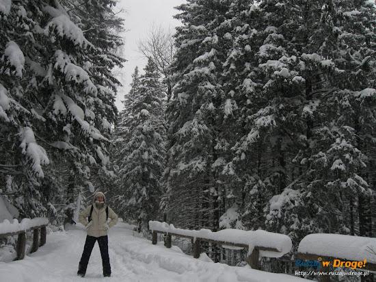 zimową porą w drodze do kamieńczyka