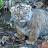 Kisha Walker avatar image