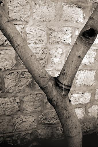Азбуката в снимки от Аба Рихман - Y