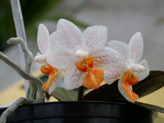 Растения из Тюмени. Краткий обзор - Страница 7 MiniMarkHolm2
