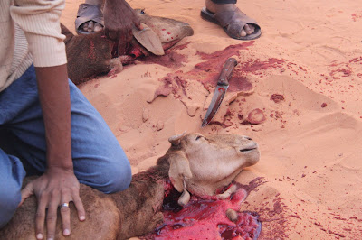 Slaughtered goats