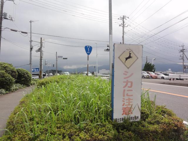 鹿飛び出し注意 東海道五十三次