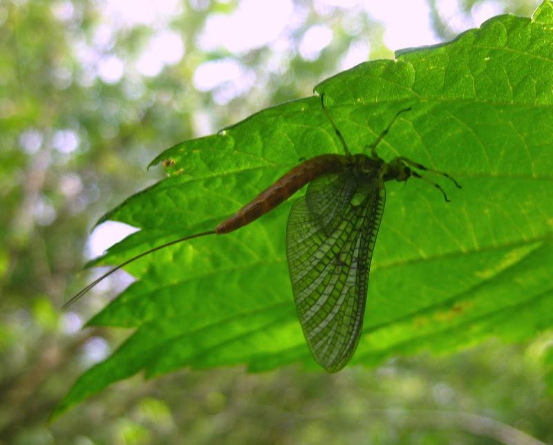 Slike insekata- buba - Page 2 IMG_3751
