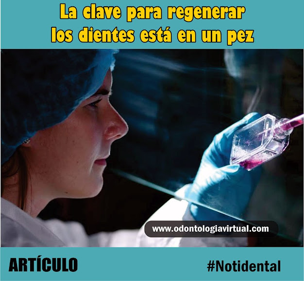 notidental-regeneración-dental