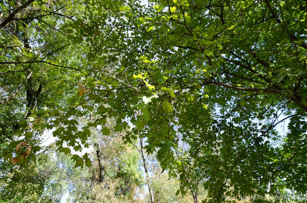 Samyang 14mm, листва