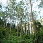Open canopy west of Wollombi Brook (364880)