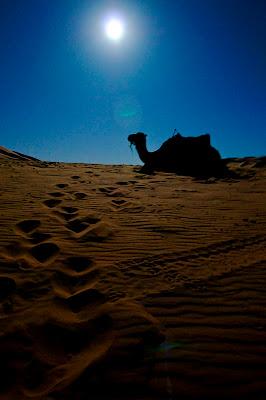 camell al desert amb lluna plena