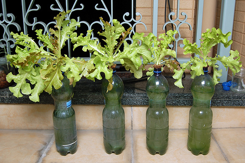 Mengenai penataan kebun hidroponik, harus disesuaikan dengan ruangan ...