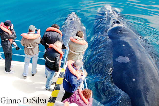 whale watching in Valdes Peninsula