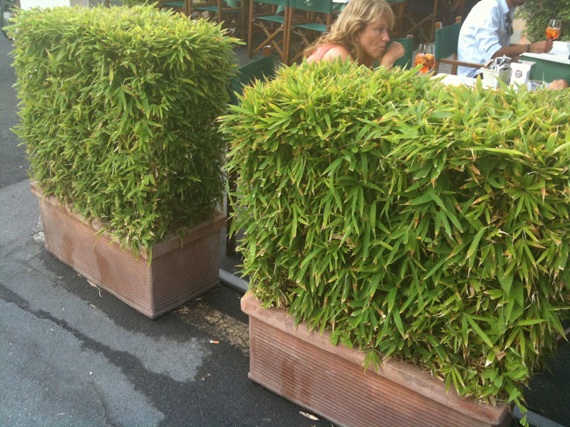 Chi ha esperienza di bambu 39 siepe siepi sempreverdi di for Siepe in vaso