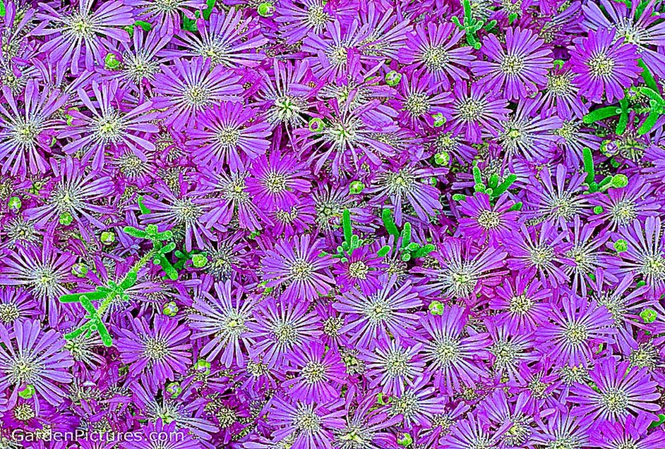 Purple Flowers Tumblr Background