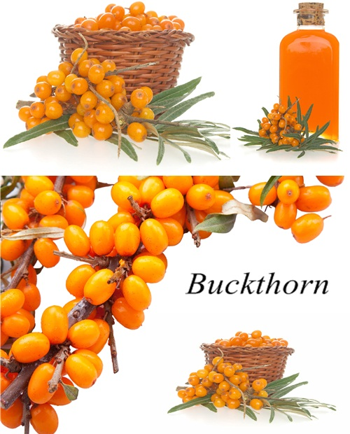 Stock Photo: Buckthorn