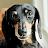 dylan vanzutphen-kann avatar image