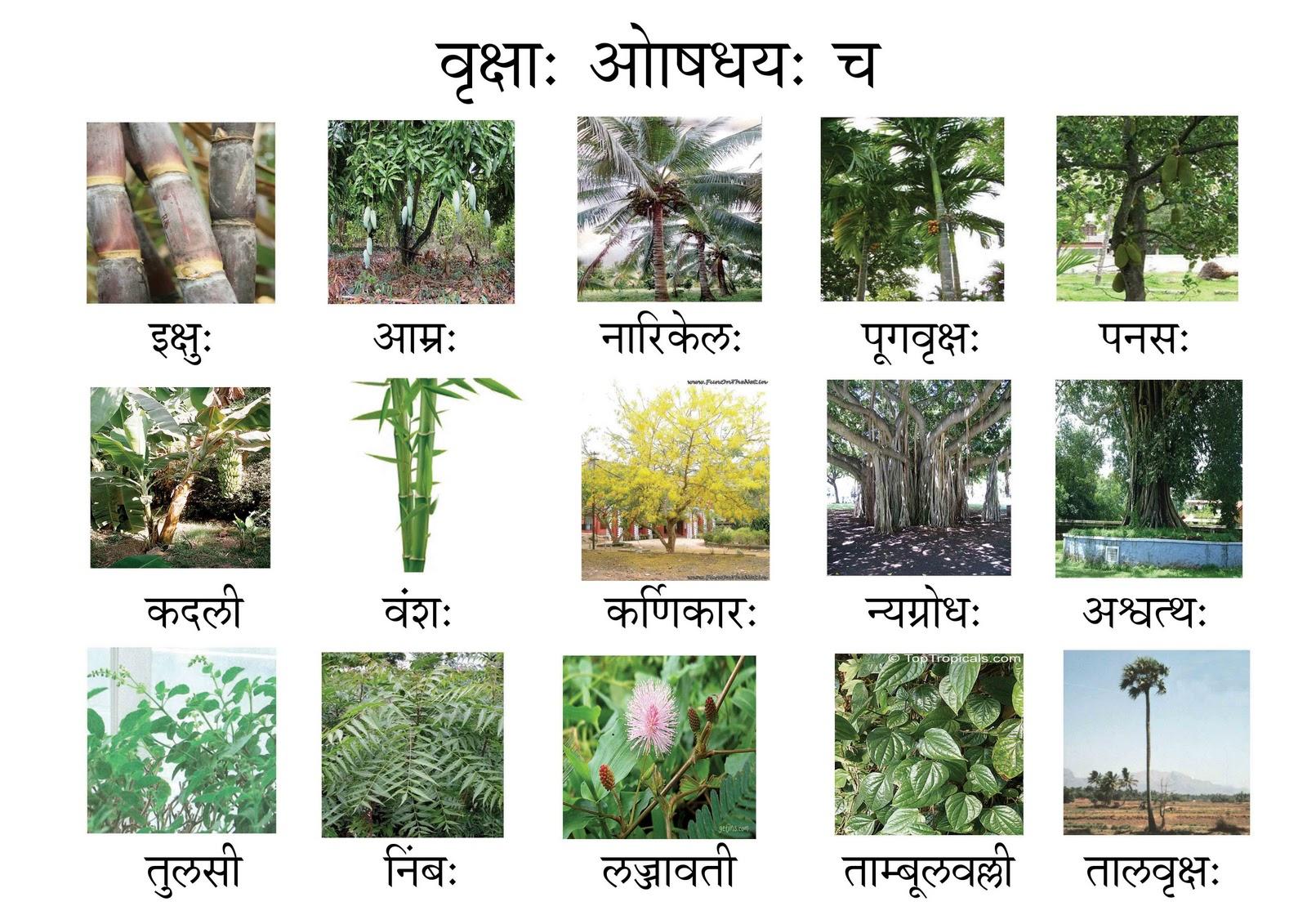 Trees Names In Sanskrit