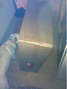 Dina erschnüffelt den Inhalt der Kiste