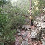 Rock walls in bushland near Blue Pool Track (148242)