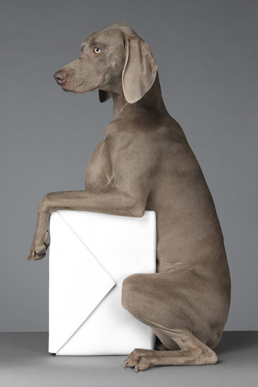 *Hat Dogs:美國攝影師William Wegman展現拿手獵狗展秀拍攝絕活! 7