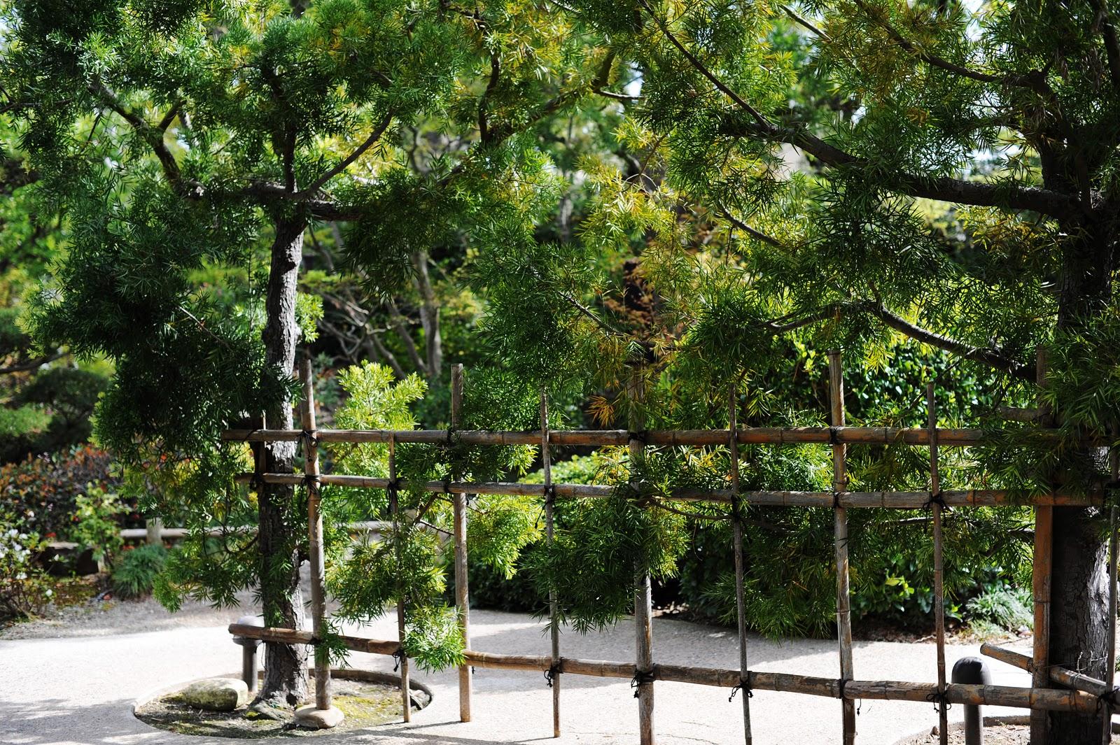 Helen Yang Photography Blog Personal Japanese Garden Cal