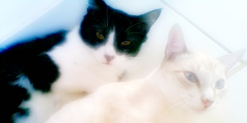 Amo meus gatinhos!