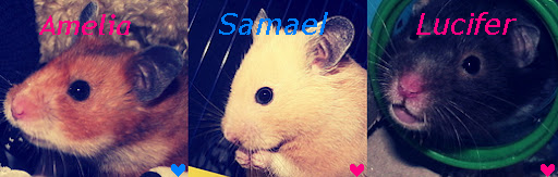 [Image: hamsterbanner.PNG]