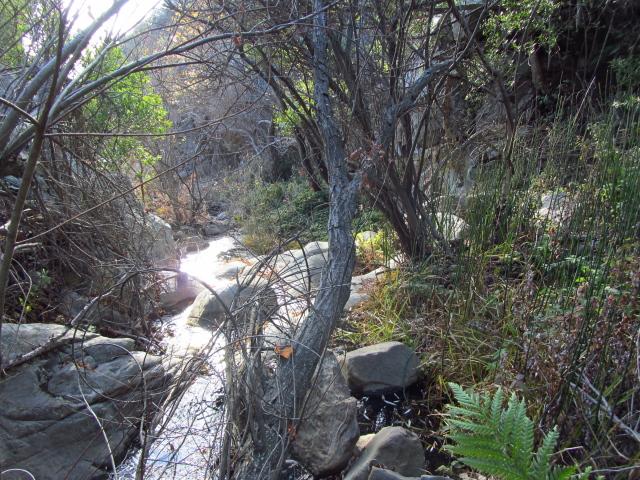 stream through the camp