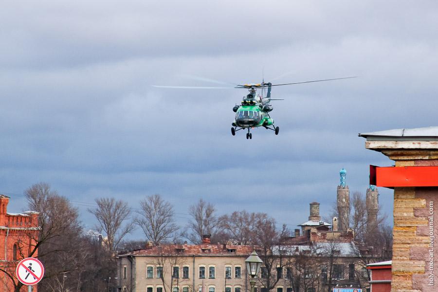 Чайки Петрограда