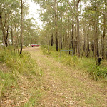 Wide track near Monkey Face viewpoint in the Watagans (322892)