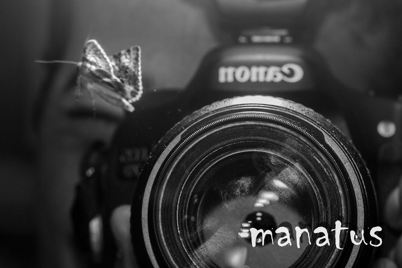 manatus foto blog polilla cámara avatar