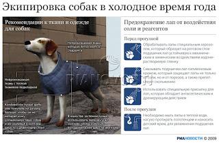 Экипировка собак в холодное время года - Инфографика. Или как одеть собаку зимой?