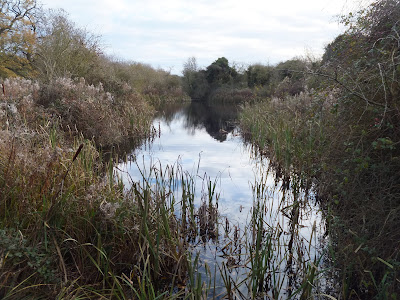 Small lake at Carleton Carrs