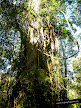 Selva Guaraní. Sendero de Yacaratía