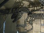 Londres: museum d'histoire naturelle