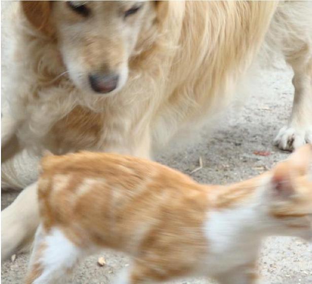 картинки котенок и собака