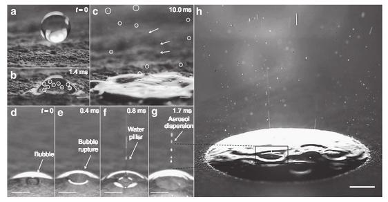 Petricor: el olor a lluvia