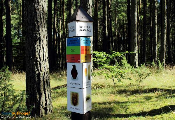 Zabawy terenowe sprawdzające wiedzę w Leśnie