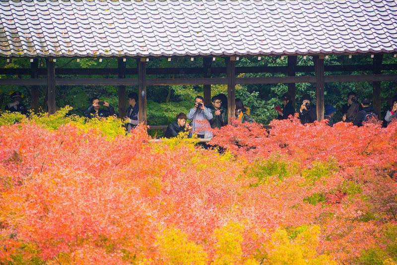 京都 東福寺 紅葉 写真3