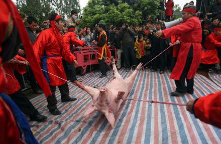 Hội Chém Lợn – Lễ hội kinh dị, đẩm máu, dã man, phản cảm nhất Việt Nam