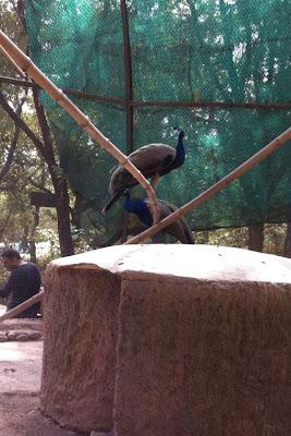 Chhattbir Zoo, Chandigarh-Patiala Road, Chhat, Punjab 140603, India