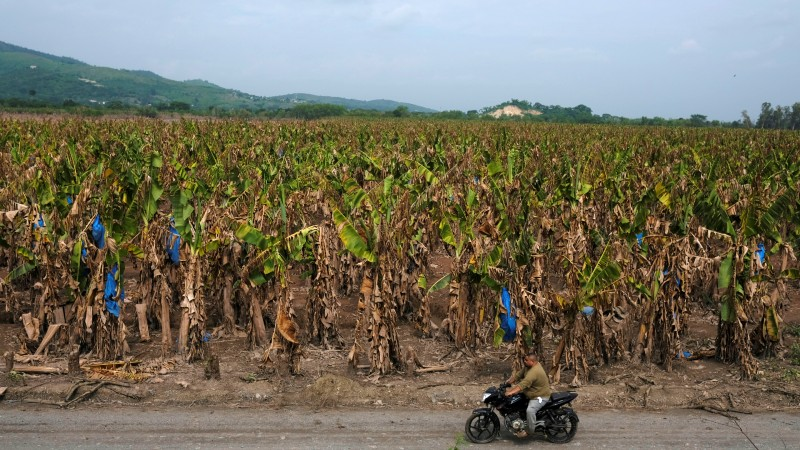Food security, agriculture remain threatened 2 months after Central American hurricanes
