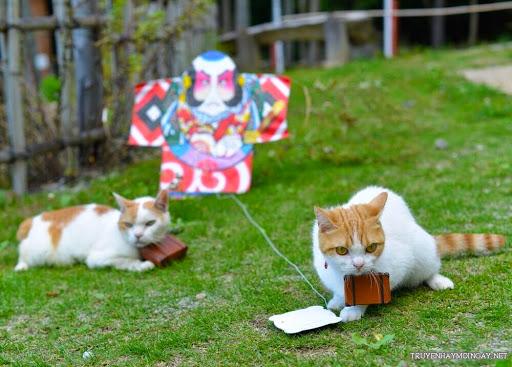 Hình Ảnh Dễ Thương Đôi Mèo Du Lịch Khắp Nhật Bản