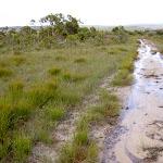 Along the Wallumarra Servicetrail (34637)
