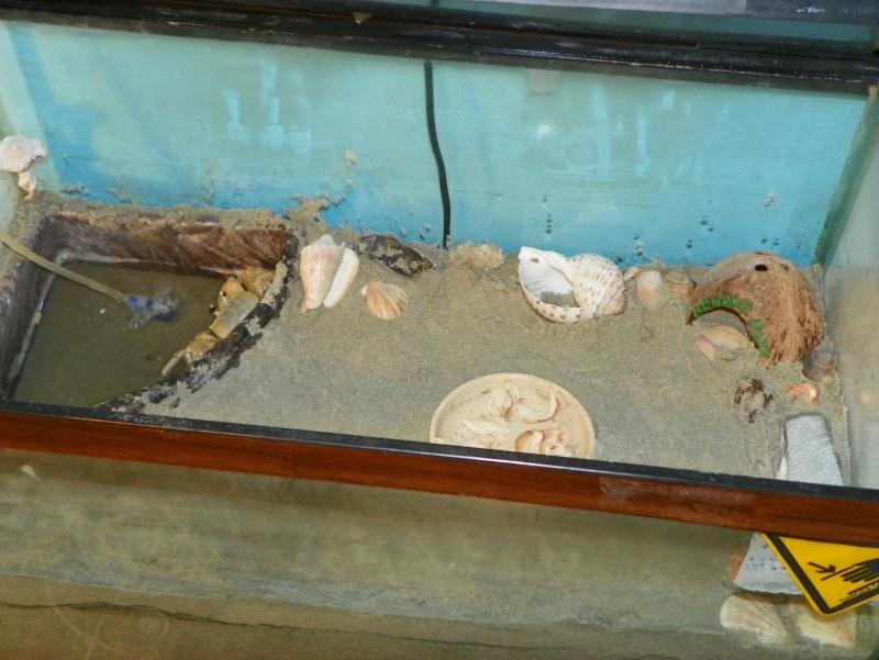 Pinchey, my sand crab 102_0215