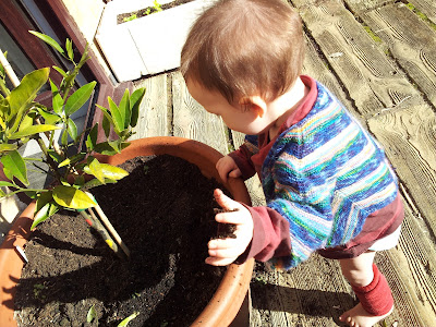 Leon pulling a handful of dirt from a large pot